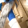 レンフリードのアナル尻尾動画 | 尻尾付きアナルプラグ動画のまとめ